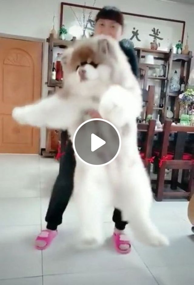 Girl And Dog In Living Room - Video & GIFs | Animals & Pets, giant dogs, dog breeds, cute girls, clothes fashion, interior living room, luxury apartments