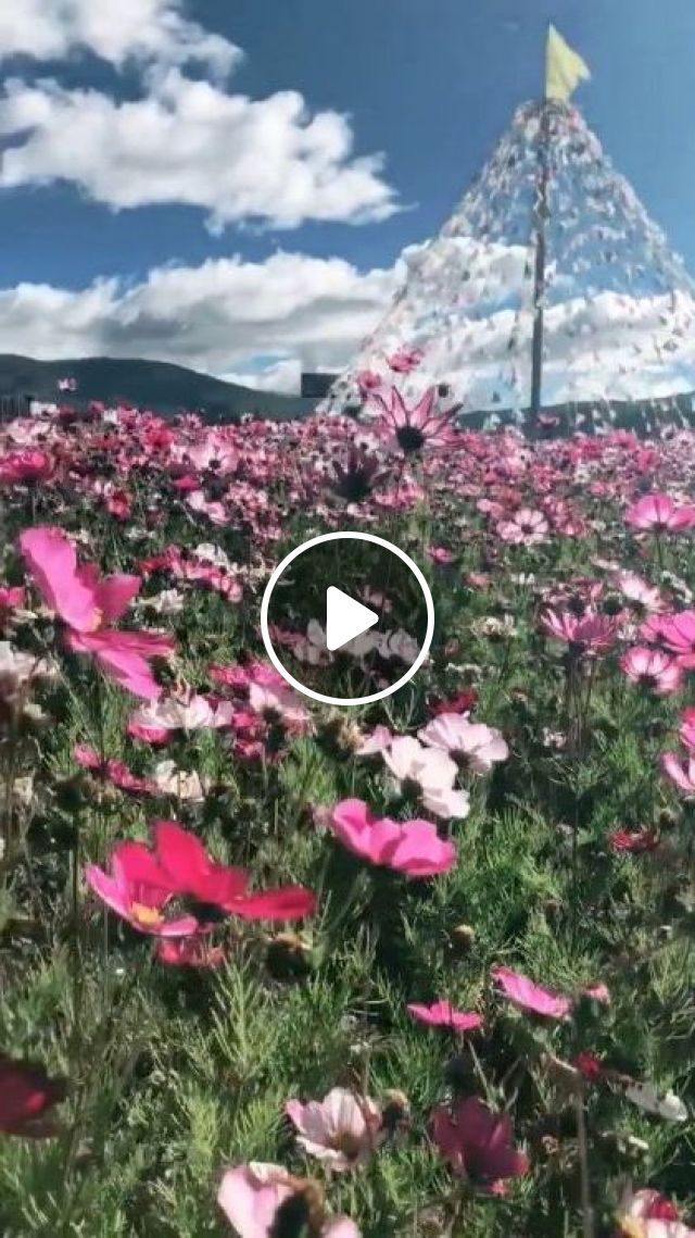 When Spring Comes Colorful Flowers Bloom On The Hill - Video & GIFs | Nature & Travel, nature, flower, sun