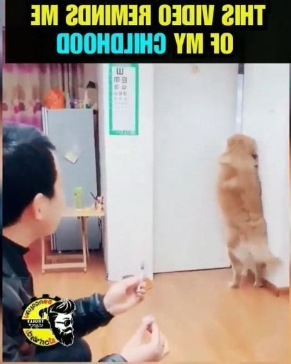 a man helps dog protect health in kitchen