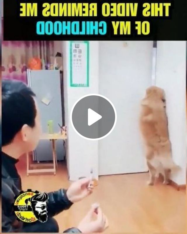 A Man Helps Dog Protect Health In Kitchen - Video & GIFs | Animals & Pets, golden dogs, good men, men's clothing, pet care, health care, kitchen equipment