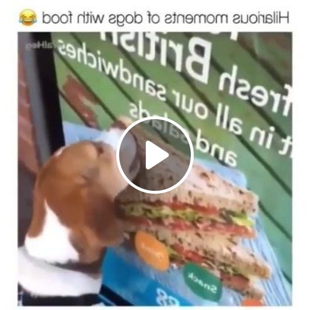 Dog Also Wants To Eat Pizza - Video & GIFs | Animals & Pets, cute dogs, dog breeds, animal feeds, pet care