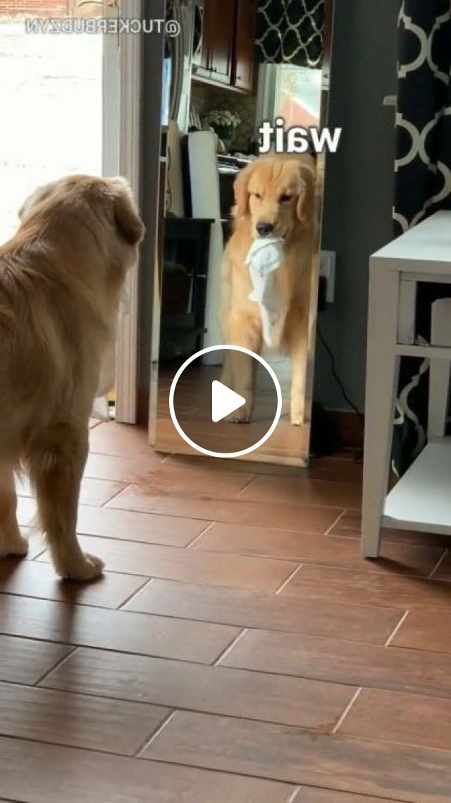 Two Dogs Play Together In Bedroom - Video & GIFs | Animals & Pets, funny dogs, adorable dogs, dog breeds, bedroom furniture