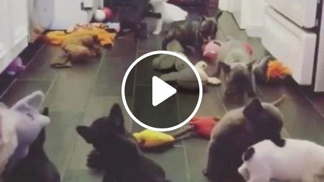 Puppies In Animal Health Center - Video & GIFs | animals & pets, pet care center, health