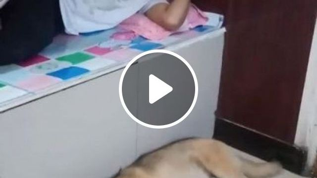 Funny Pets In Apartment - Video & GIFs | Animals & Pets are smart, cute rabbits, dog breeds, apartment furniture, pet care