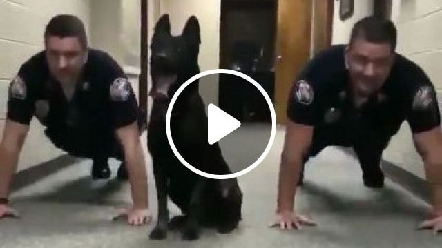 Smart Dog Trained By Police - Video & GIFs | Animals & Pets, smart dogs, dog training, police uniforms, police offices