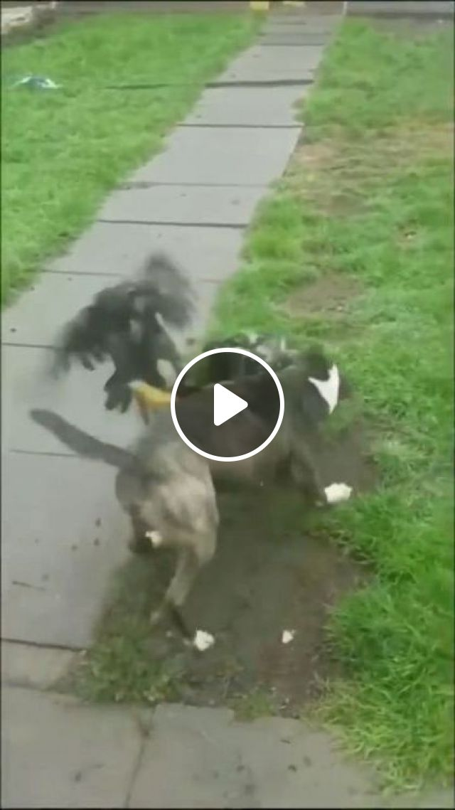 Good Boy Does Not Allow Violence On His Watch - Video & GIFs | Animals & Pets, smart dogs, dog breeds, Take care of pets, animal health