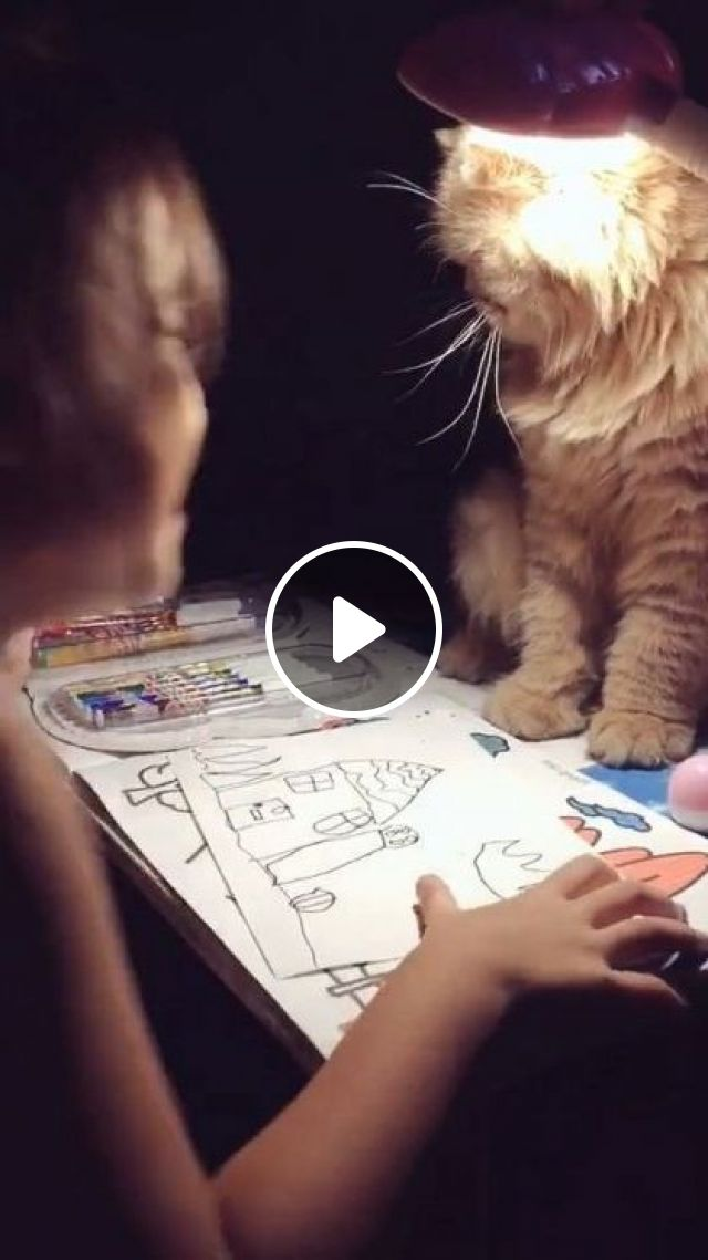 Cat Also Wants To Learn With Children - Video & GIFs | Animals & Pets, yellow cats, cute cats, school supplies, cute kids, baby clothes