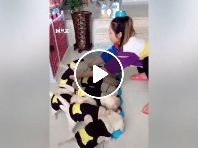 Health Care Girl For Puppies - Video & GIFs | Animals & Pets, have cute children, Health care, cute girls, ladies clothes, luxury apartments