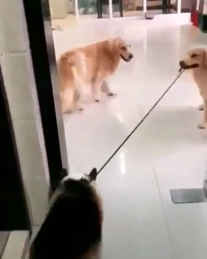 That dog getting pushed by thing made me smile most