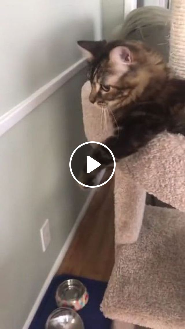 Cat Doesn't Like Another Cat Near Him In Kitchen - Video & GIFs | animals & pets, cats, cat breeds, kitchen, kitchen furniture
