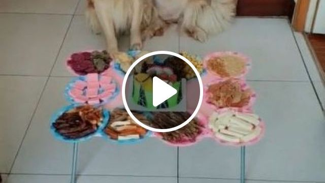 Happy Birthday For Two Dogs In A Day Video Gifs
