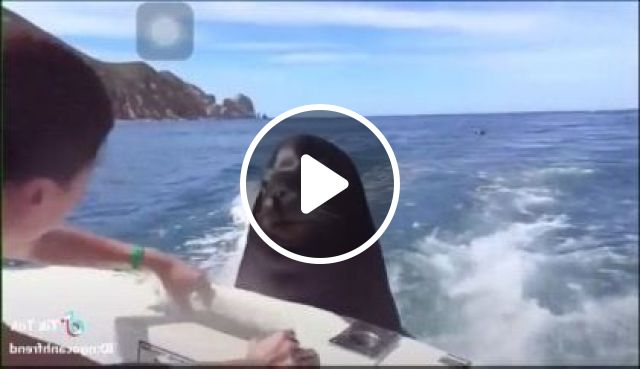 Seal Likes Food On A Cruise Boat - Video & GIFs | Animals & Pets, seals, food, tourist boats, tourists, sea travel