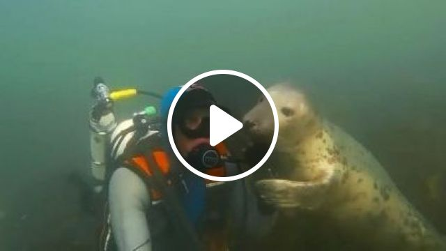Seals Are Just Dogs Of Sea - Video & GIFs | Nature & Travel, dog, adorable, sea, ocean