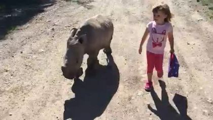 Baby rhino and baby together to school