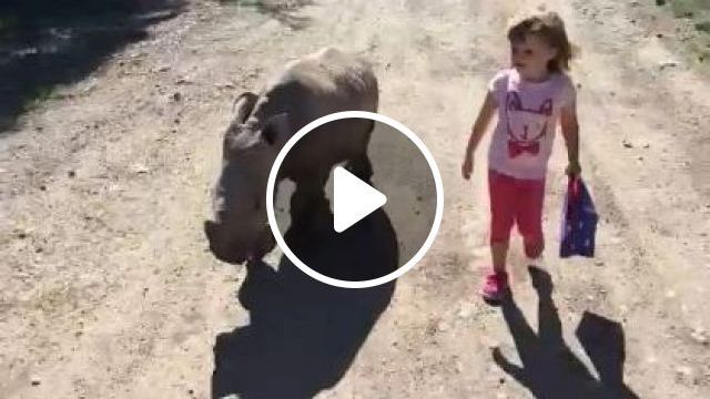 Baby Rhino And Baby Together To School - Video & GIFs | Animals & Pets, cute kids, baby clothes, cute rhino, elementary school, kids education