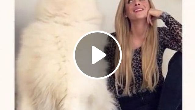I Think Dog Sings Better! - Video & GIFs | Animals & Pets, smart dogs, dog breeds