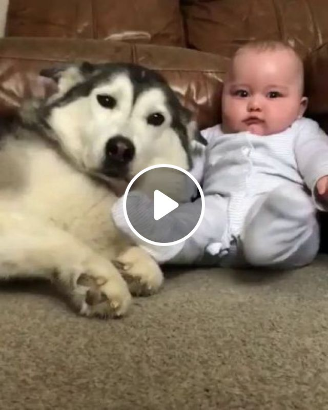 Today's Dog Takes Care Of Baby In Apartment - Video & GIFs | Animals & Pets, cute dogs, dog breeds, luxury apartments, lovely babies, baby clothes