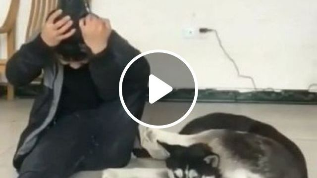 A Man Tried Very Hard But Still Lost To Dog. - Video & GIFs | Smart Animals & Pets, smart dogs, dog breeds, healthy men, men's clothes, yoga practice
