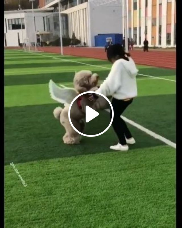 Girl And Dog With Angel Wings On Grass - Video & GIFs | Animals & Pets, Girl, female fashion, dog, dog breed