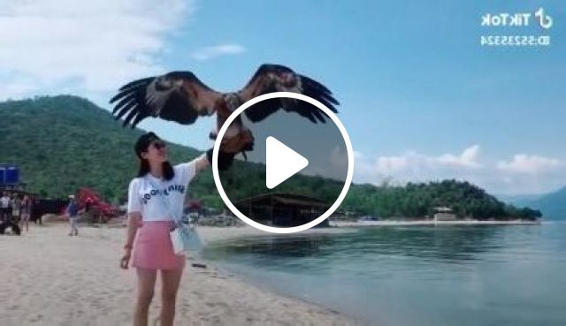 Girl Traveling Everywhere With Birds - Video & GIFs | Nature & Travel, girls, clothes fashion, sea travel