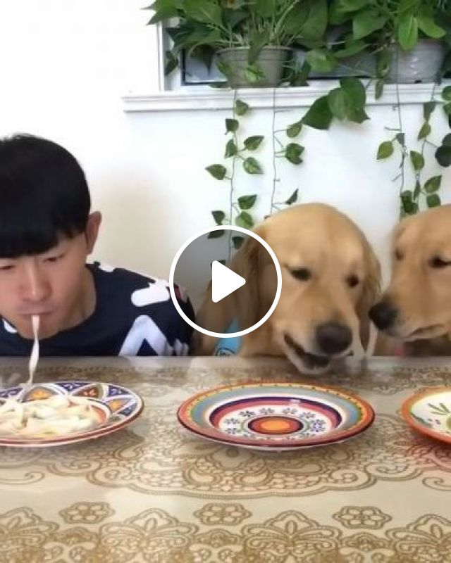 Dogs Are Having Dinner With Him In Dining Room - Video & GIFs | Animals & Pets, food, dog, adorable, dining room