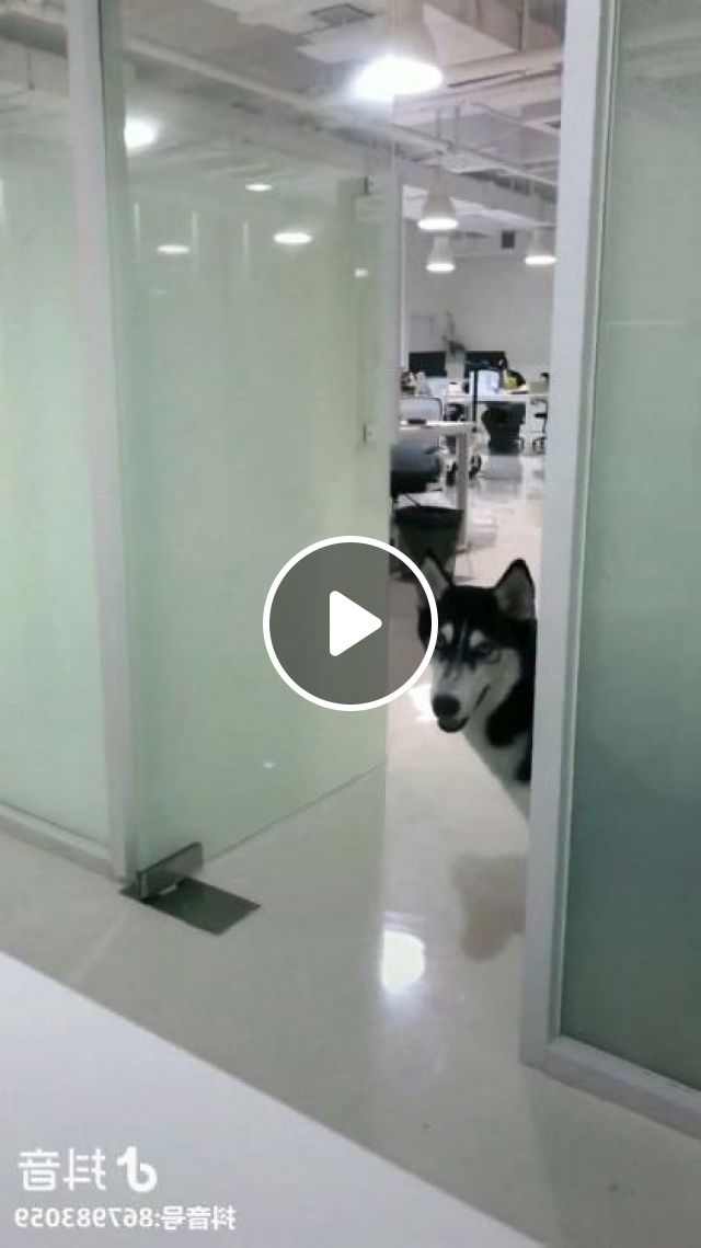 In Office, Dog's Lunch Time And Office Staff - Video & GIFs | Animals & Pets, office programming, office equipment, luxury computers, office workers, smart dogs, dog breeds, delicious food
