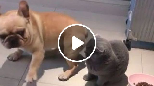 Puppy And Cat Playing In Phone Store - Video & GIFs | Animals & Pets, cute puppies, smart cats, dog breeds, phone shops