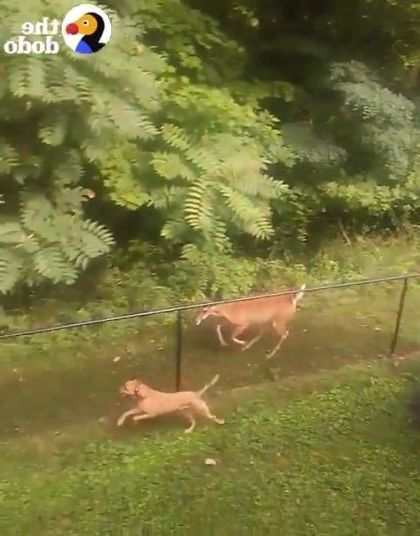 Just a deer and dog having time of their lives together
