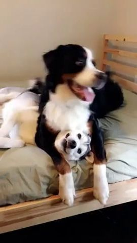 dog doesn't know where his friend went
