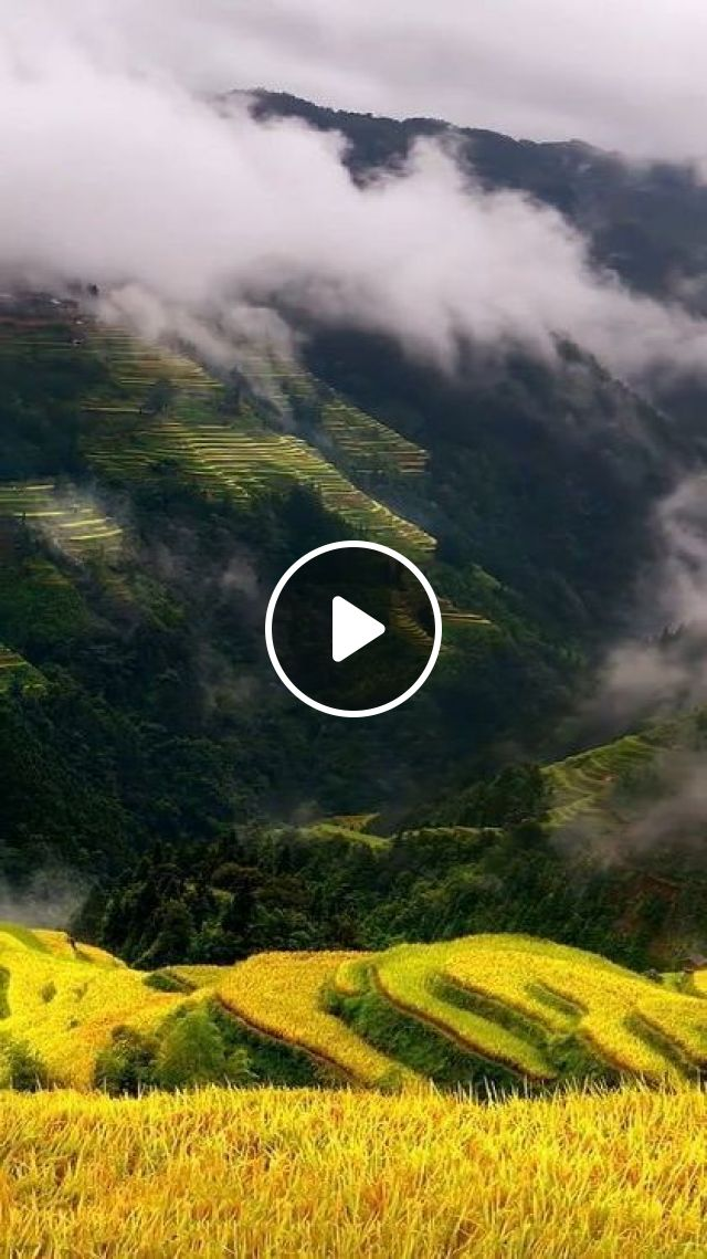 Beautiful Field - Video & GIFs | Nature & Travel, nature, beauty, wind