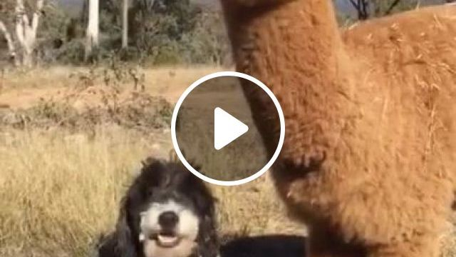 Eating With Your Best Friends On Occasion - Video & GIFs | Animals & Pets, cute dogs, friendly animals, Belgium travel