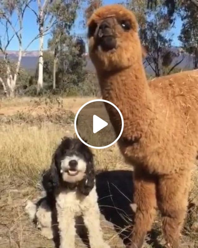 Eating With Your Best Friends On Occasion - Video & GIFs   Animals & Pets, cute dogs, friendly animals, Belgium travel