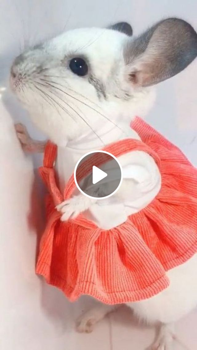 Mouse With Pink Skirt - Video & GIFs | Animals & Pets, cute mice, animal clothes