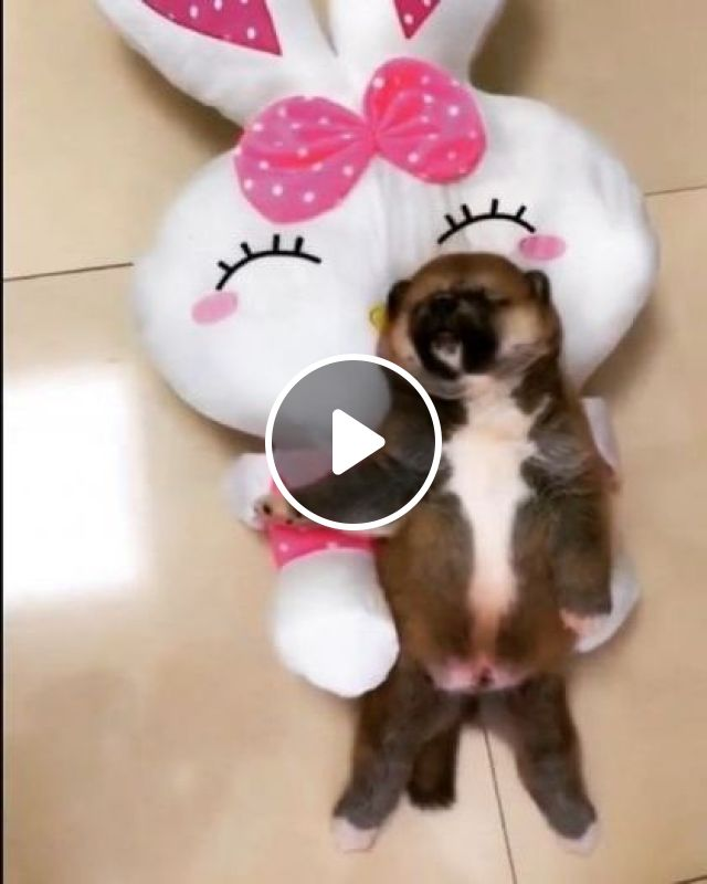 In Apartment, Sleeping Puppy - Video & GIFs | Animals & Pets, apartments, furniture, puppies, dog breeds