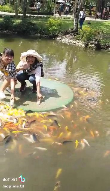 Girls like colorful fish in pond