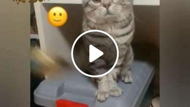 Cat Is Very Sad, We Should Take Cat To Travel - Video & GIFs   Animals & Pets, cute cats, Korean travel