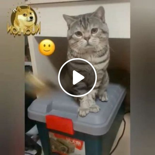 Cat Is Very Sad, We Should Take Cat To Travel - Video & GIFs | Animals & Pets, cute cats, Korean travel