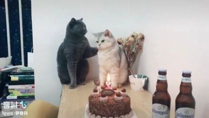 Cats are celebrated birthday in living room