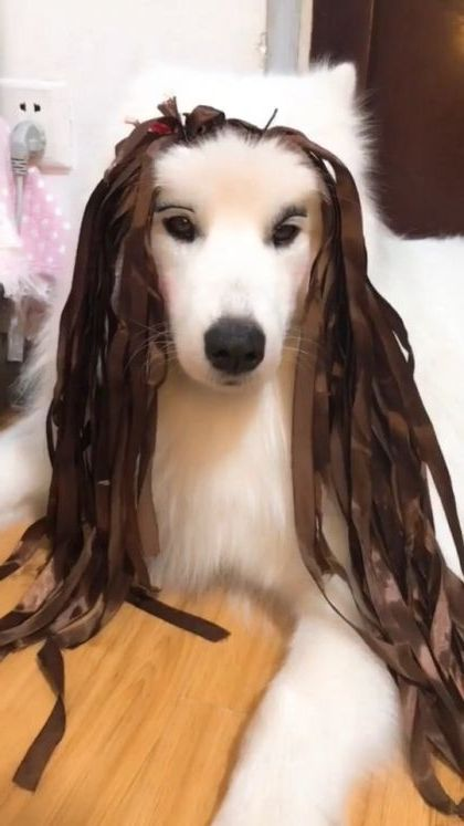 Dog and new hairstyles
