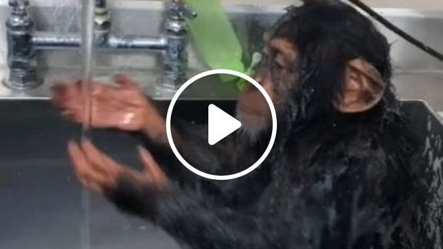 He Picked His Nose But He's Cute - Video & GIFs | animals & pets, smart monkeys, bathroom equipment