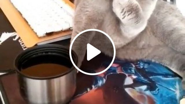Cat Is Eating Good Food - Video & GIFs | animals & pets, cute cats, caring cats