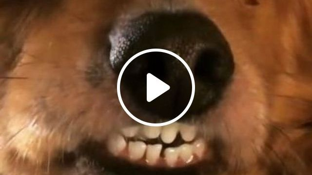 Me When They Say Smile For Camera! LOL - Video & GIFs | animals & pets, cute dogs, dog breeds