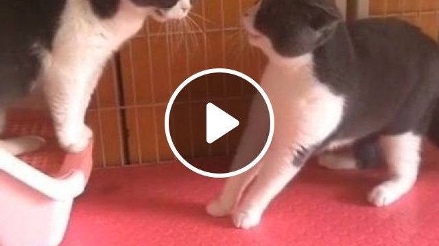 It Looks Like Mom Said To Clean Room And Daughter Didn't Do It - Video & GIFs   animals & pets, cute cats, caring cats