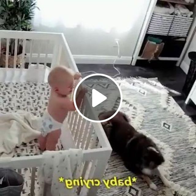 This Is Why Every Parent Should Have A Nanny Cam - Video & GIFs | animals & pets, siberian husky, alaskan malamute, cute babies, baby diapers
