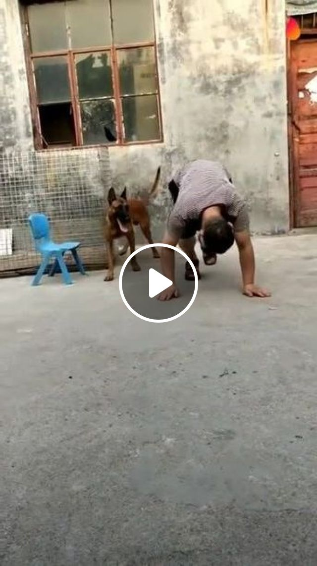 Who Is More Talented - Video & GIFs   animals & pets, smart dogs, funny animals