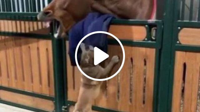 Dog And Horse Are Friends - Video & GIFs   animals & pets, smart dogs, cute horses