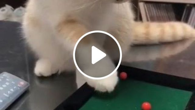When Cat Just Put It In Hole Song Say Wow - Video & GIFs | animals & pets, smart cats, cat breeds, children toys