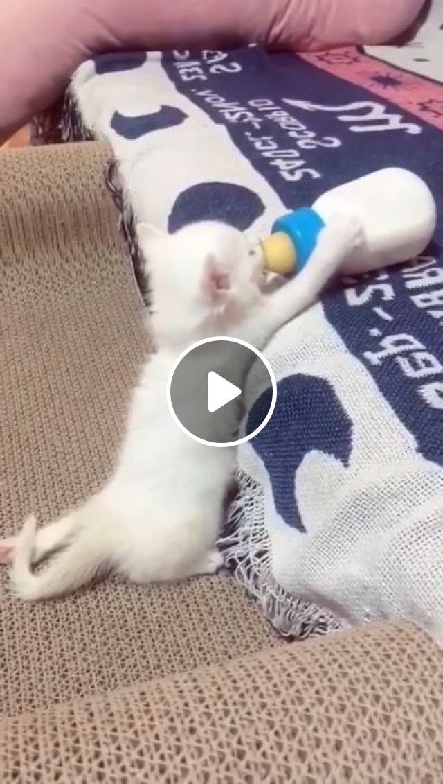My Heart Is Melted Now... - Video & GIFs   animals & pets, cute cats, caring cats