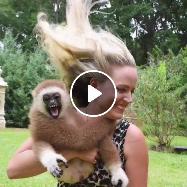 My Favorite Thing About Gibbons, Is They Smile And Laugh - Video & GIFs | animals & pets, friendly animals, caring animals
