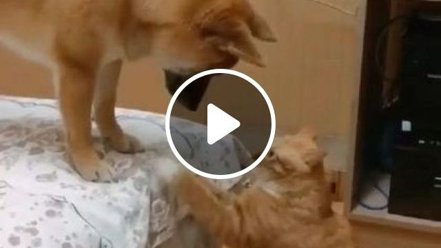 Cat Is Trying To Talk To This Dog - Video & GIFs | animals & pets, cute cats, dog breeds, soft mattresses